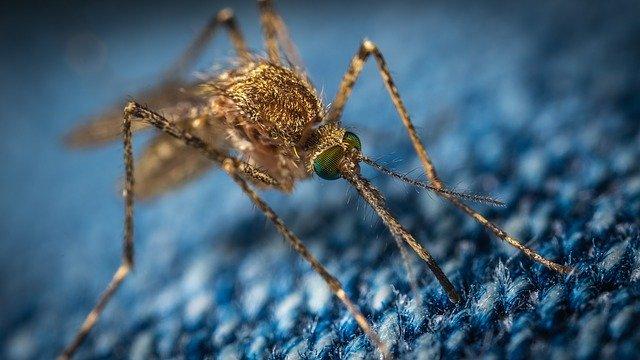 קטלן יתושים